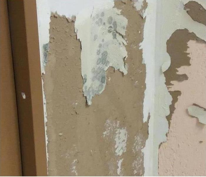 Mold from the aftermath of Harvey
